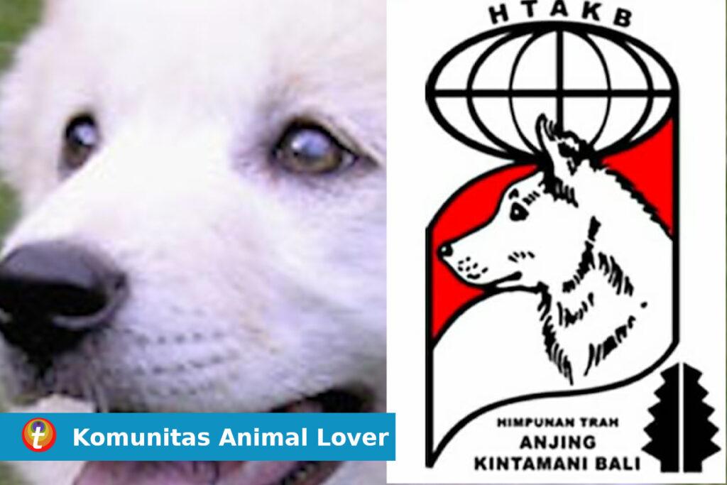 komunitas anjing kintamani