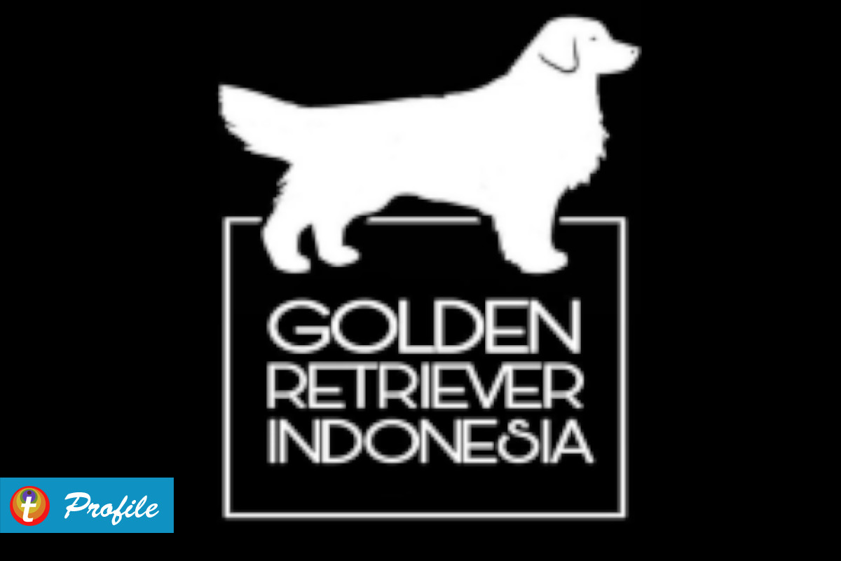 golden retriever indonesia