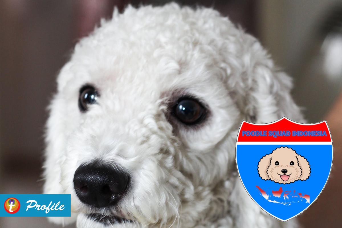 Anjing Ikonik Dunia Dari Poodle Squad Indonesia